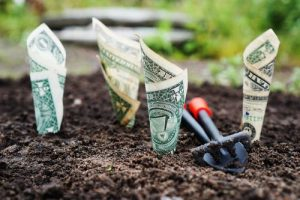 dollar bills planted into the ground