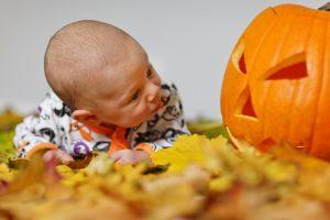 baby looking at a pumpkin