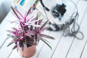 An indoor plant you will need to take care of if you decide to move your plants